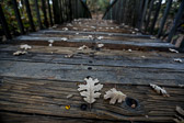 Fallen leaves on a bridge. Also see the black and white version.