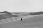 Fellow photographer looking for the perfect spot to capture the desolate desert views at White Sands National Monument.