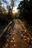 Trail in the San Bernardino mountains as the sun is rising during the fall season.