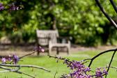 Park bench at the arboretum.