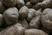 Large russet potatoes waiting to be made into perfect homemade mashed potatoes.