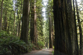 At Redwoods State Park in northern California.