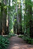 Trail through Yosemite National Park in California.