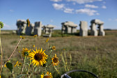 Sunflowers at Carhenge (a remake of Stonehenge) near Alliance, Nebraska.