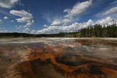 Along the Upper Geyser Basin trail in Yellowstone National Park in Wyoming.