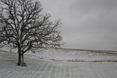 Image of a sIngle barren tree and park bench in the middle of an open field covered in snow (also available in black and white).