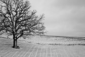 Black and white image of a sIngle barren tree and park bench in the middle of an open field covered in snow.