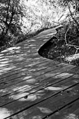 Black and white image of a boardwalk in a nature reserve.