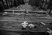 Black and white image of fallen leaves over a wooden bridge.