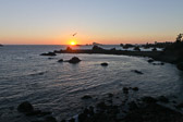 A bird flying through the sunset into the Pacific ocean at Crescent City, California.