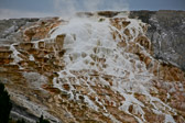 At Mammoth Hot Springs in Yellowstone National Park in Wyoming
