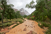 What the normally clear water looks like at Zion National Park after thunderstorms rolls through.